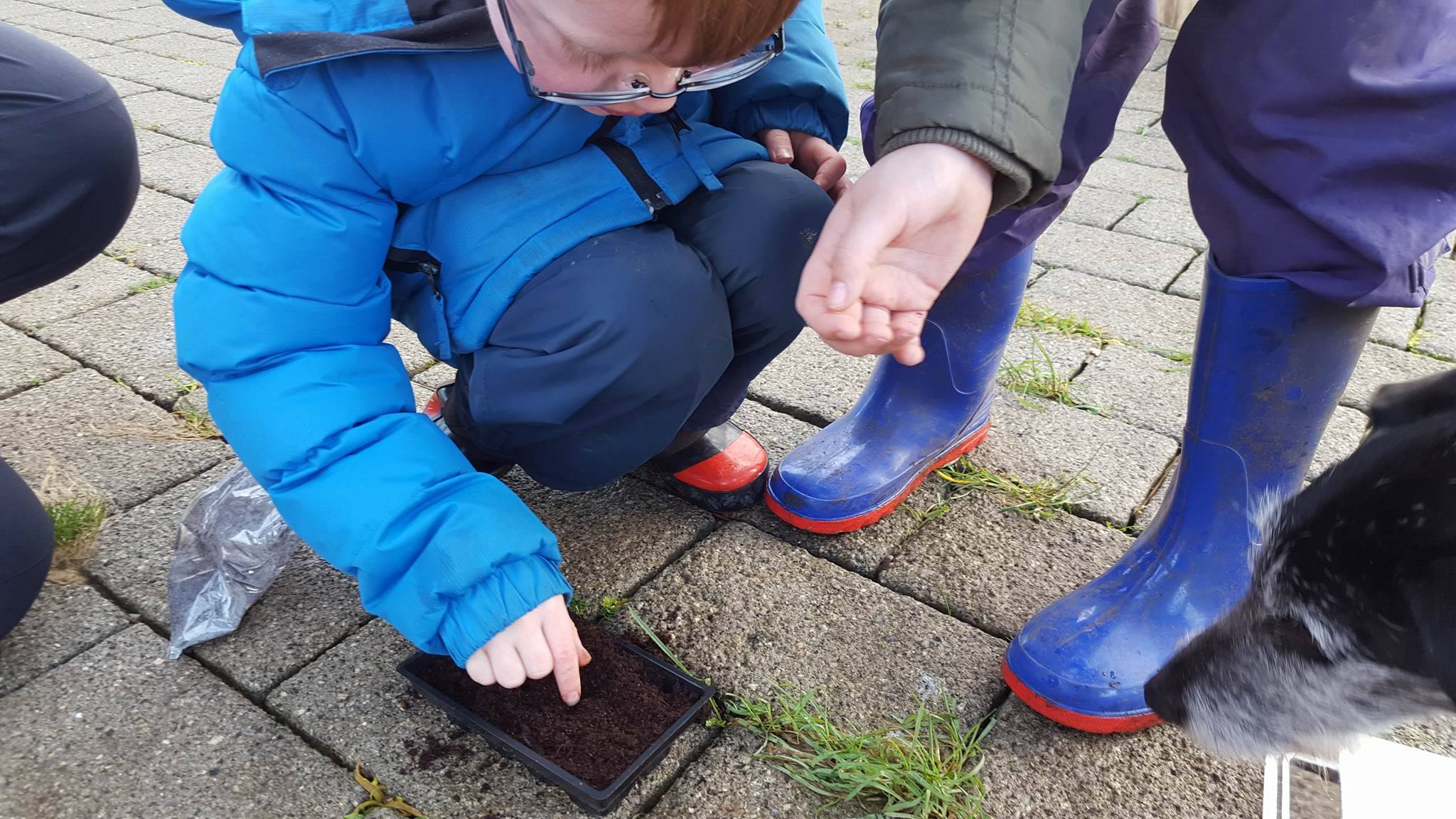 Nurture Group – teamwork and tomato planting!