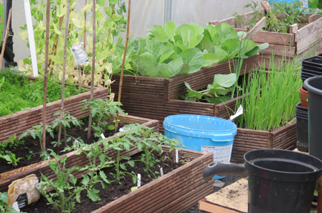 Project Polytunnel: With Doc & Bert