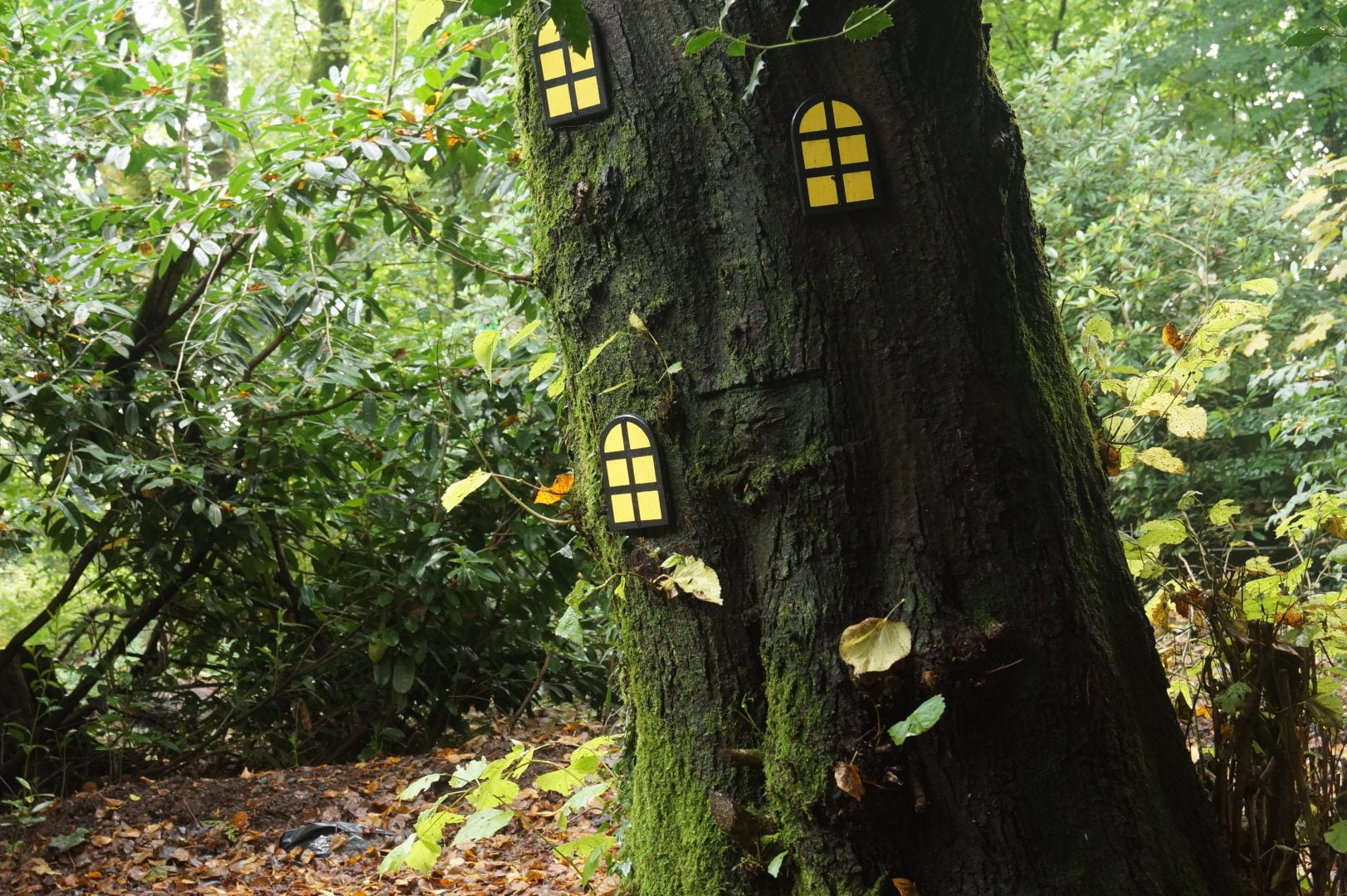 a photo of the fairy doors on the tree that I took on one of the days of my work experience